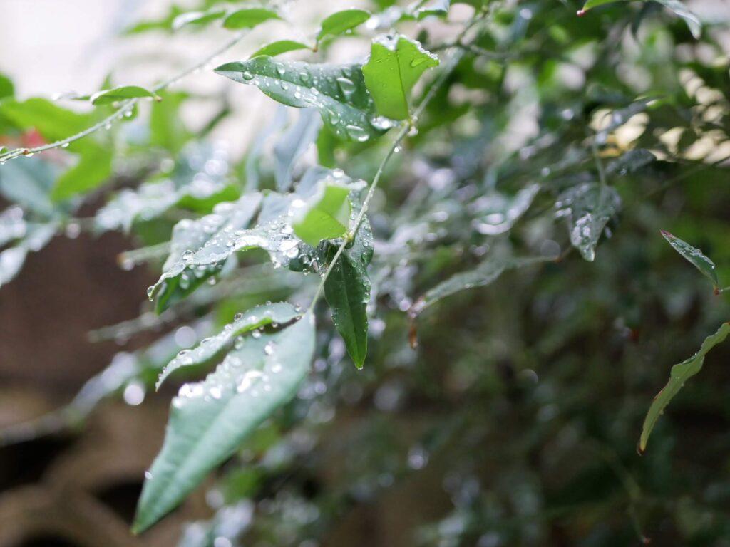 今朝、梅雨の庭で。