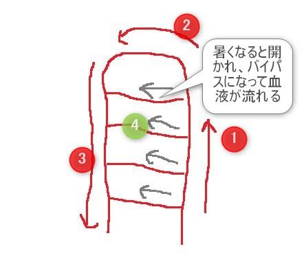 AVAの拡大図です。はしごの横の血管がAVAです。